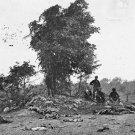 New 5x7 Civil War Photo: Dead on Miller Farm, Battle of Antietam - Sharpsburg