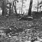New 5x7 Civil War Photo: Casualties at the Foot of Little Round Top, Gettysburg