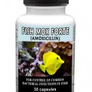 Antibiotics Amoxicillin Fish Mox Forte 30 Capsules 500mg