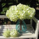 10 x  Wedding Bridal Party Home Decor Artificial Hydrangea Bouquet Silk Flowers Leaf(green