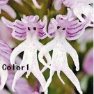 Rare Orchis Italica - Amazing Naked Man Orchid Flowering Plant -10 seeds