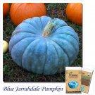 Blue Jarrahdale Pumpkin seeds