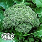 Calabrese Broccoli Seeds -250 SEEDS
