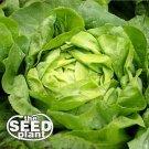 Buttercrunch Lettuce Seeds- 750 NON-GMO SEEDS
