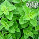 Oregano Seeds - 250 SEEDS