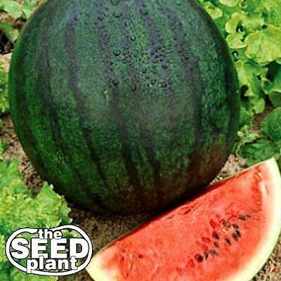 Sugar Baby Watermelon Seeds - 25 SEEDS