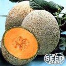 Hale's Best Jumbo Cantaloupe Seeds 25 SEEDS