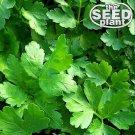 Plain Italian Parsley Seeds - 600 SEEDS