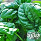 Early No. 7 Spinach Seeds - 100 SEEDS