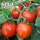 Cherry Tomato Seeds 125 SEEDS NON-GMO