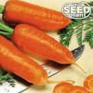 Chantenay Red Core Carrot Seeds - 250 SEEDS