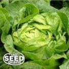 Buttercrunch Lettuce Seeds- 1500 SEEDS