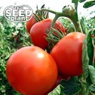 Rutgers Tomato Seeds - 125 SEEDS