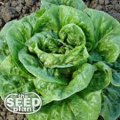 Bibb Lettuce Seeds - 500 SEEDS