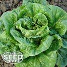 Bibb Lettuce Seeds - 1,000 SEEDS