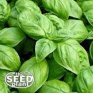 Large Leaf Italian Basil Seeds - 500 NON-GMO SEEDS