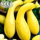 Crookneck Yellow Squash Seeds - 25 SEEDS