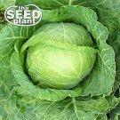Copenhagen Cabbage Seeds -500 SEEDS