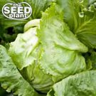 Iceberg Lettuce Seeds - 1000 SEEDS