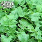 Seven Top Turnip Seeds - 500 SEEDS