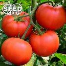 Bradley Tomato Seeds - 125 SEEDS NON-GMO