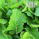 Florida Broadleaf Mustard Seeds - 500 SEEDS