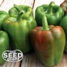 California Wonder Bell Pepper Seeds - 150 SEEDS NON-GMO