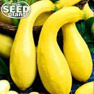 Crookneck Yellow Squash Seeds - 10 NON-GMO SEEDS