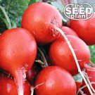 Cherry Belle Radish Seeds - 100 SEEDS