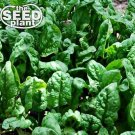 Giant Noble Spinach Seeds - 50 SEEDS NON-GMO