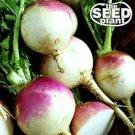 Purple Top White Globe Turnip Seeds - 500 SEEDS NON-GMO