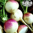 Purple Top White Globe Turnip Seeds - 1000 SEEDS