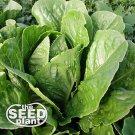 Parris Island Romaine Lettuce Seeds - 1,000 SEEDS NON GMO