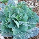 Georgia Southern Collard Green Seeds - 500 SEEDS NON-GMO