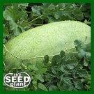 Charleston Grey Watermelon Seeds - 10 SEEDS NON-GMO