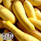 Early Prolific Straightneck Squash Seeds - 10 SEEDS NON-GMO