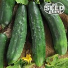 Marketmore 76 Cucumber Seeds - 25 SEEDS NON-GMO
