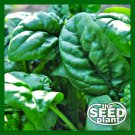 Early No. 7 Spinach Seeds - 300 SEEDS NON-GMO