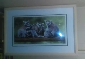 "Framed MANDIE HAYWOOD ""TREE-O LEMUR"" Hand Signed Limited Edition Giclee print!"