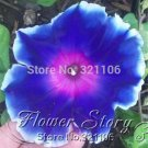 100 JAPANESE MORNING GLORY Seeds easy growing and beautiful flower seeds