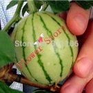 100 Sugar Baby Watermelon Seeds Small Size Sweet Juicy