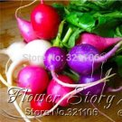 EASTER EGG MIXED COLORS HEIRLOOM ROUND RADISH 400+ PROFESSIONAL ORGANIC SEEDS