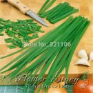 GARLIC CHIVES 100 seeds HERB/SPICE Aromatic