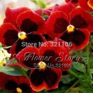 Beautiful red and brown mixed pansy flower seeds 1 Pack 30 Seeds