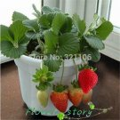 100 Potted strawberry seeds vegetable seeds to grow vegetables seasonal fruits