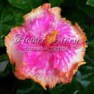 Hibiscus Perennial Flower 20 Seeds Color Easy to Grow