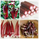 10 Red okra seeds rare colorgood for health low in carbs delicious