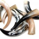 """Amazing Lot of 5 (FIVE) - 11"""" to 16"""" Polished Water Buffalo Cow Horn Create a Po"""