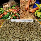 Kopi Luwak 426 Grams Pure Arabica Wild Civet Green Coffee Beans Unroasted