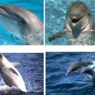 Lot Of 4 Dolphins Fabric Panel Quilt Squares
